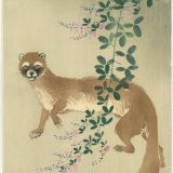 Weasel and Japanese Clovers